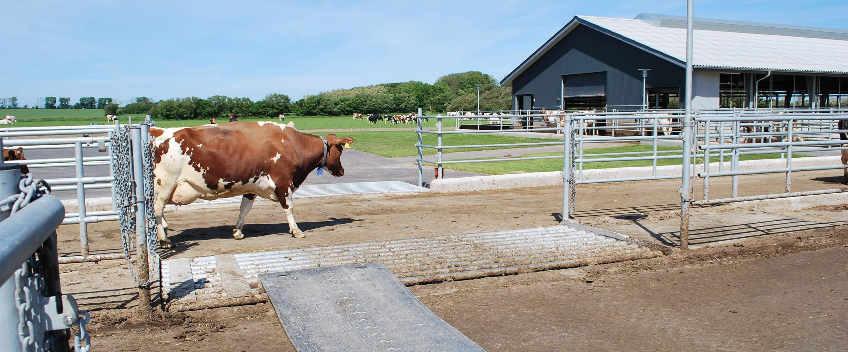 Lean Farming logistics planning at a dairy cattle farm